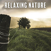 Relaxing Nature – Soft Music to Rest, Peaceful Mind, Soothing Guitar, Piano Music, Pure Relaxation, Relief, Calmness, Nature Sounds de Healing Sounds for Deep Sleep and Relaxation