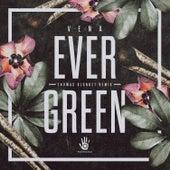 Evergreen by Vena