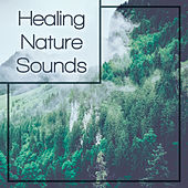Healing Nature Sounds – Soothing Nature Music, Waves of Calmness, Zen Garden, New Age Relaxation by Echoes of Nature