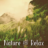 Nature & Relax – Healing Sounds for Relaxation, Deep Sleep, Forest Melodies, Relaxed Mind, Singing Birds by Deep Sleep Relaxation