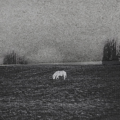 Groundz by Mick Pedaja