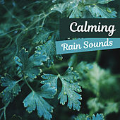 Calming Rain Sounds – Soft Sounds to Relax, Piano Relaxation, Easy Listening, New Age Music de Nature Sound Collection