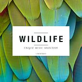 Wildlife - Unique Music Selection, Vol. 13 by Various Artists