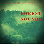 Forest Sounds - The Sounds Of Nature For Deep Relaxation by Nature Sounds (1)