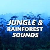 Jungle & Rainforest Sounds by Jungle (2)