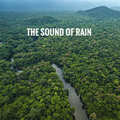 The Sound of Rain by Various Artists