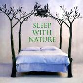Sleep With Nature by Twilight Meditation