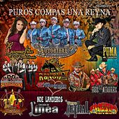 Puros Compas una Reyna by Various Artists
