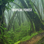 Tropical Forest by Various Artists
