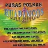 Puras Polkas & Huapangos (Instrumental) de Various Artists