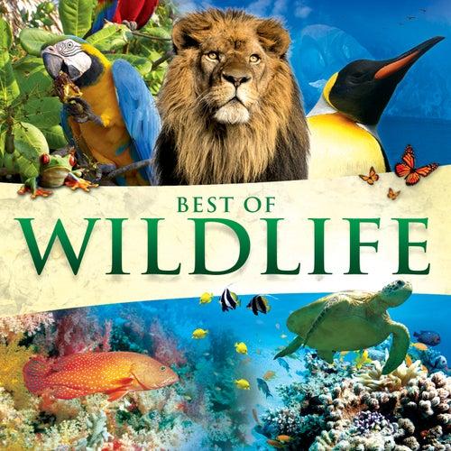 Best Of Wildlife by Global Journey