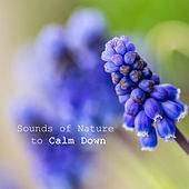 Sounds of Nature to Calm Down – Peaceful Music, Healing Songs, Anti Stress Music, Pure Relaxation, Soothing Piano, Sounds of Birds, Relaxing Waves by Deep Sleep Relaxation