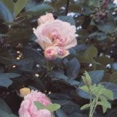 In Bloom de Wy