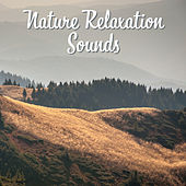 Nature Relaxation Sounds – Soothing New Age Music, Forest Waves, Calm Mind, Rest & Relax de Sounds Of Nature