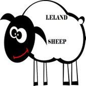 Sheep by Leland