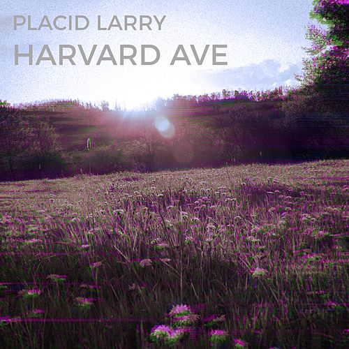 Harvard Ave by Placid Larry