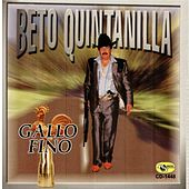 Gallo Fino by Beto Quintanilla