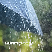 Naturally Recorded Rain by Various Artists