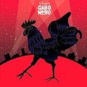 Gallo negro de El Twanguero
