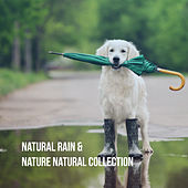 Natural Rain & Nature Natural Collection by Various Artists