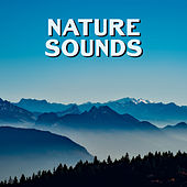 Nature Sounds – Deep Relaxation, New Age 2017, Relief Stress, Bliss, Healing Rest de Nature Sounds Artists