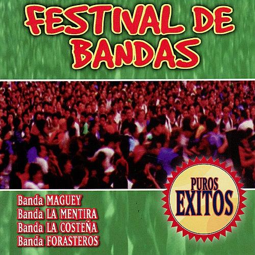 Festival De Bandas by Various Artists