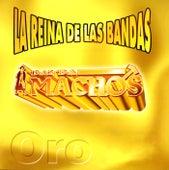 La reina de las bandas Vol. I by Banda Machos