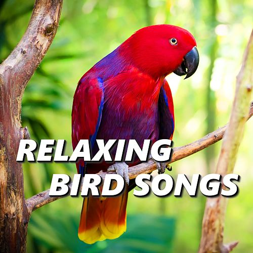 Relaxing Bird Songs by The Birdsongs