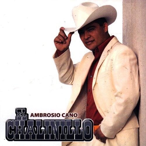 La Venganza De Chito Cano De El Chalinillo Vivo Música By Napster