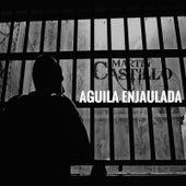 Águila Enjaulada by Martin Castillo