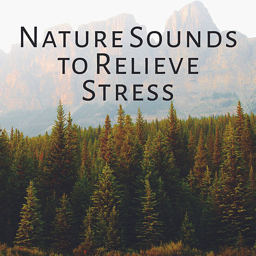 Nature Sounds to Relieve Stress – Easy Sounds, Calming Waves, Healing Memories, Peaceful Music by Nature Tribe