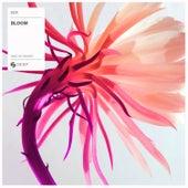 Bloom by EDX