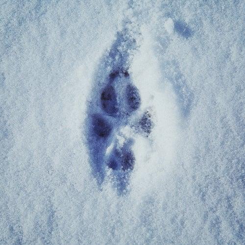 Footprints de Metrickz