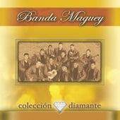 Coleccion Diamante de Banda Maguey