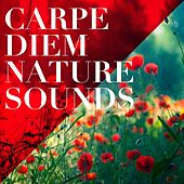 Carpe Diem Nature Sounds de Various Artists