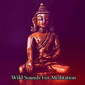Wild Sounds For Meditation by Yoga Workout Music (1)