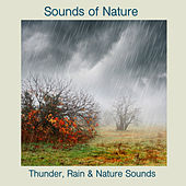Thunder, Rain & Nature Sounds by Sounds Of Nature