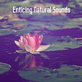 Enticing Natural Sounds by Lullabies for Deep Meditation