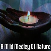A Mild Medley Of Nature von Best Relaxing SPA Music