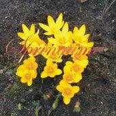 Springtime de Various Artists