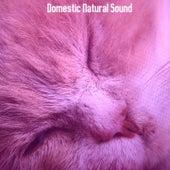 Domestic Natural Sound by Baby Sleep Sleep