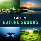Ambient Nature Sounds – Calm New Age Melodies, Sounds to Rest, Music for Healing Therapy de Nature Sounds Artists