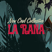 La Rana by New Cool Collective