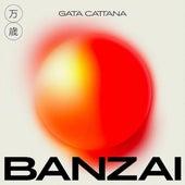 Banzai de Gata Cattana