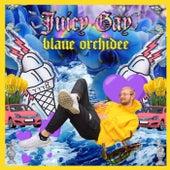 Blaue Orchidee von Juicy Gay