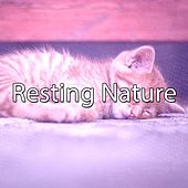 Resting Nature by Smart Baby Lullaby