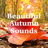 Beautiful Autumn Sounds by Various Artists