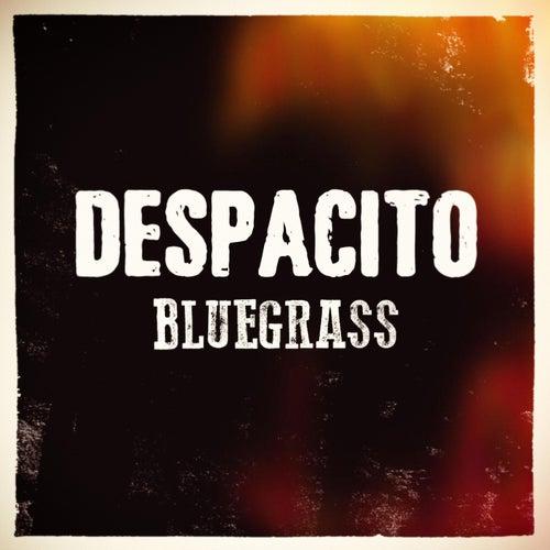 Despacito (feat. Euriamis Losada) von Chris Roberts