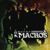 Arremángala Arrempújela by Banda Machos