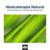 Musicoterapia Natural: Música Relajante con Sonidos de la Naturaleza(Lluvia, Olas del Mar, Canto de los Pájaros, Ranas y Grillos) by Deep Sleep Relaxation